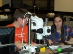 Using a dissecting microscope to view fossil crocodile teeth
